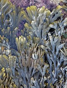 8891 Seaweed