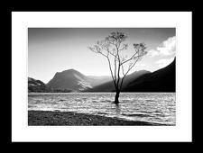 Lone Tree at Buttermere framed edition
