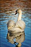 Swan at Grasmere