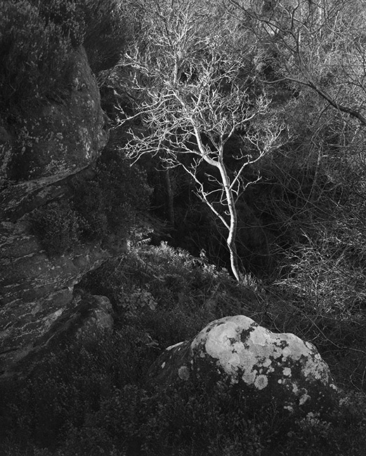 'Sunlit tree'