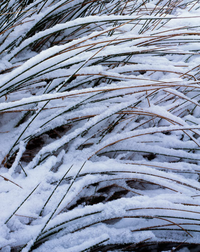 'Grass and Snow'