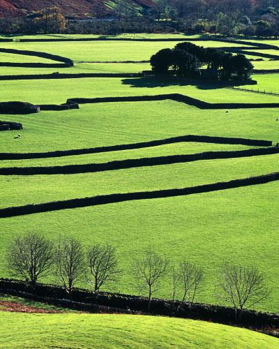 'Barns and Walls'