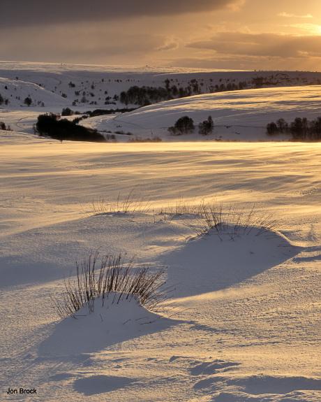 'Fen Bog Sunset'
