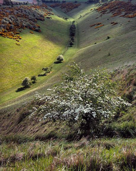 'Spring in Sylvan Dale'