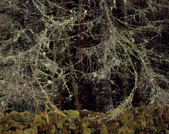 'Circles of trees'