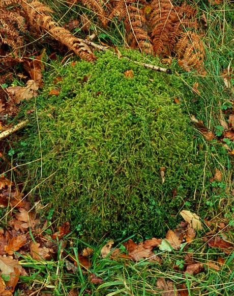 'Round Moss'
