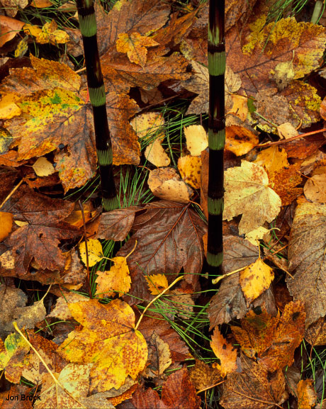 'Leaves in the Wolds'