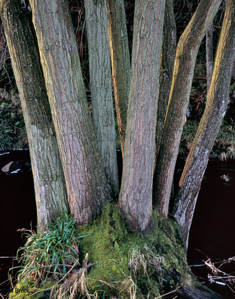 'Side lit tree'