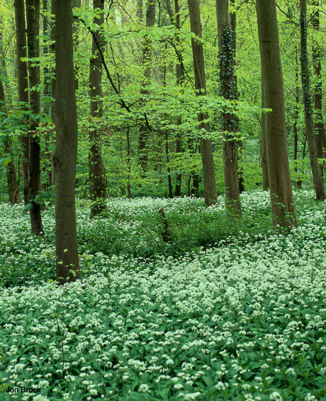 'Spring Woods in the Wolds'