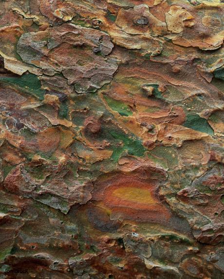 'Scots Pine Bark'
