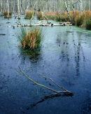'Wetland Heath, Skipwith'