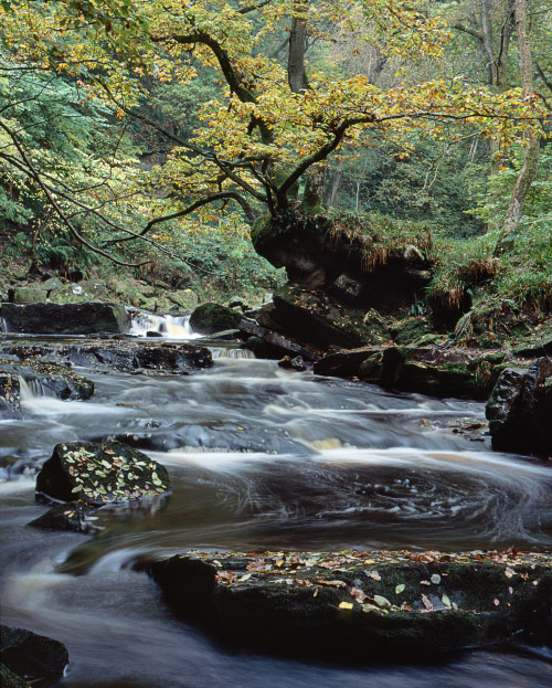 'Autumn at West Beck'