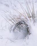 'Curls of Grass'