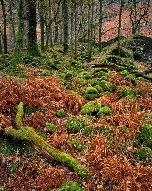 'Borrowdale Mosses'