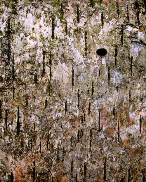 'Dot in the landscape'