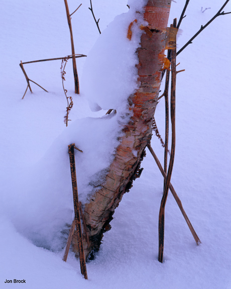 'Boggy Tree'