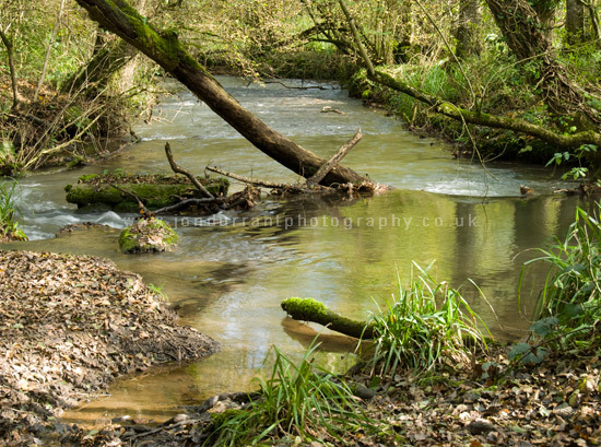 Edford Woods