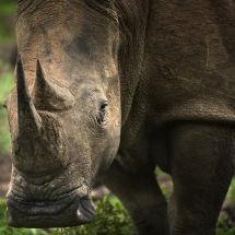 Pilanesberg National Park, South Africa.