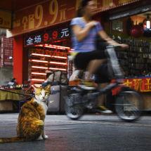 Shenzhen, China.