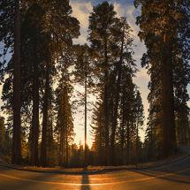 Giant Sequoia National Park, USA.