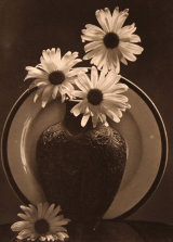 Vase and Daisies
