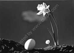 """Harbingers of Spring"" - 1949"