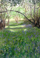 Bluebells and Wood Anemones.