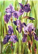 June Irises