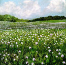 Opium Poppies, Hampshire