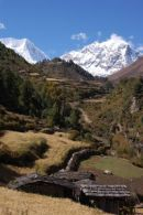 Fields below Llogaon, Manaslu