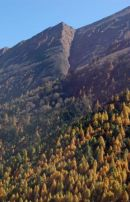 Autumn trees, Manaslu