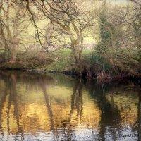 River Reflections V