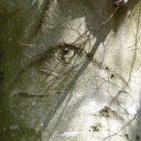 Tree Detail I