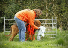 Giving the scent article (in this case a dogs towell) to K9SD Forager at the start of a search