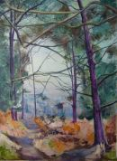 New Forest Pines