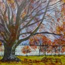 The Mighty Beech (Montpellier Gardens) (sold)