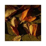 Autumn ensemble