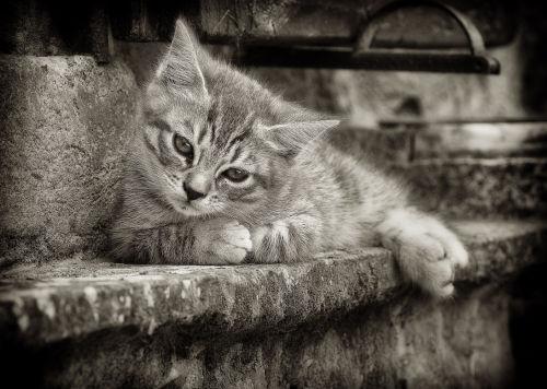 Cosy kitten
