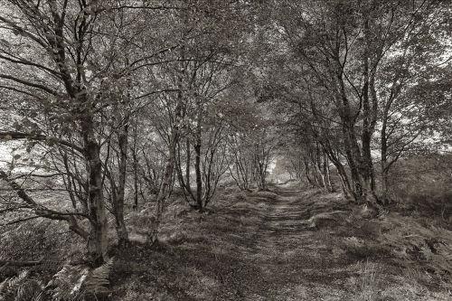 Dalby path