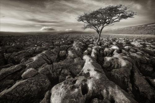 Conistone Moor Tree