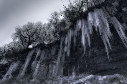 Ice Roots