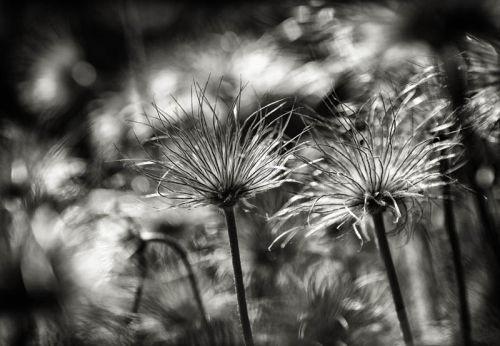 Seededs