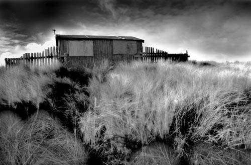 Shed in grass