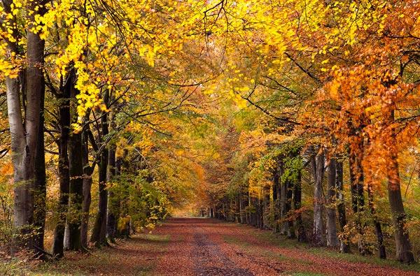 Grovelly Wood Autumn