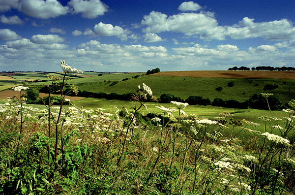 Knowle Hill in Summer