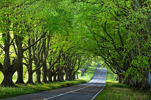 Beech Avenue Kingston Lacy