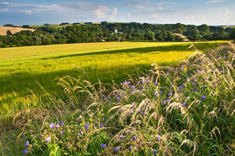 Barley and Cranesbill Broad Chalke