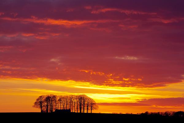 Beech Copse Sunset