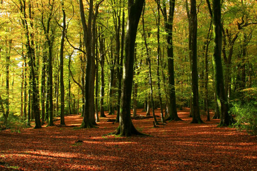 Bramshaw Woods in Autumn