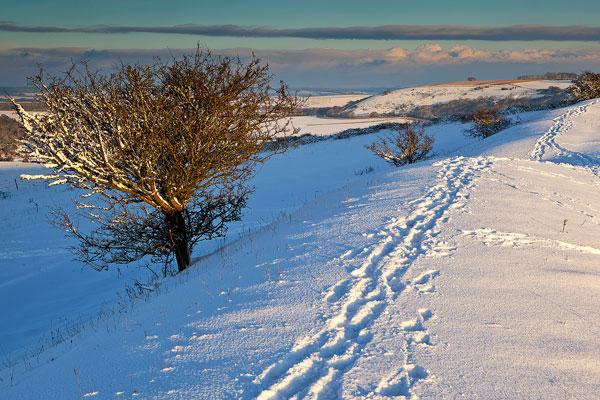 Winter Tracks Chiselbury Ring